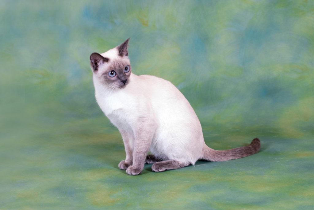 Pretty cat, 674E7529-DDB0-481D-8178-2CBC4C78 @iMGSRC.RU