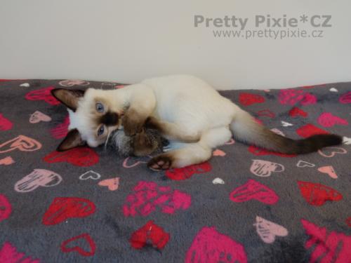 Afrodité Pretty Pixie, CZ