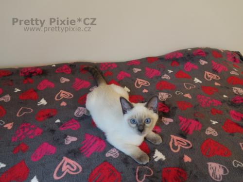 Ares Pretty Pixie, CZ