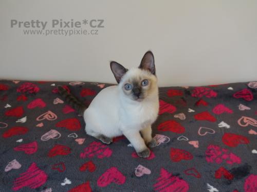 Artemis Pretty Pixie, CZ
