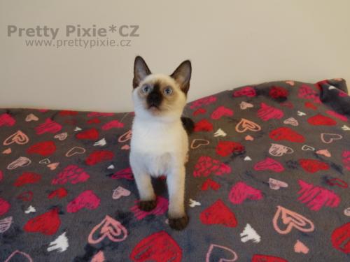 Arthur Pretty Pixie, CZ
