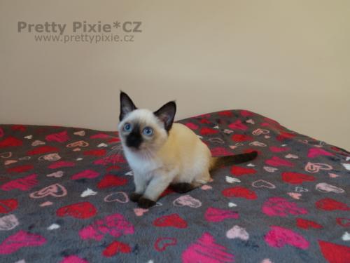 Athéna Pretty Pixie, CZ